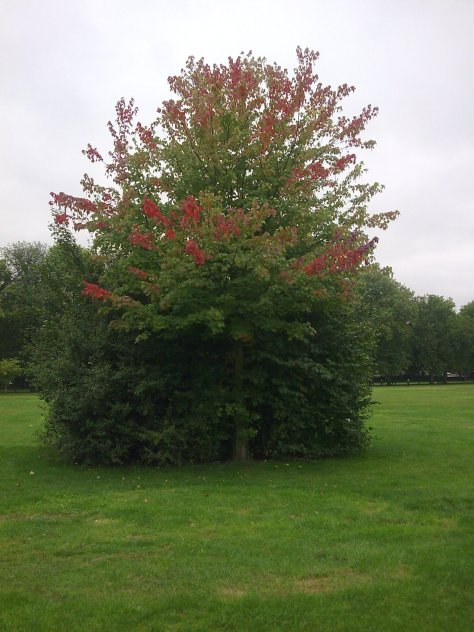 Beautiful red-tipped tree