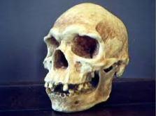 """Australoid"" skull"